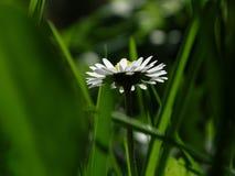 Flower, Flora, Grass, Plant royalty free stock photos