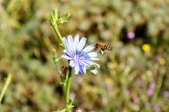 Flower, Flora, Honey Bee, Bee stock photos