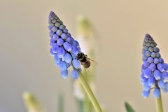 Flower, Flora, Insect, Pollinator Stock Photo