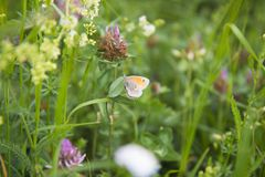 Flower, Flora, Meadow, Grass Royalty Free Stock Photo