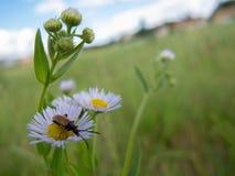 Flower, Flora, Meadow, Wildflower stock images
