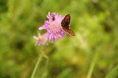 Flower, Flora, Nectar, Insect Royalty Free Stock Photos