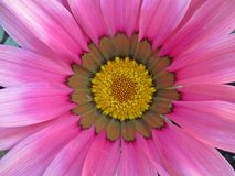 Flower, Flora, Petal, Close Up stock image