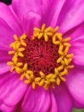 Flower, Flora, Petal, Close Up royalty free stock photography