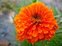 Flower, Flora, Petal, Wildflower Stock Photo