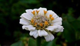 Flower, Flora, Petal, Wildflower royalty free stock photo
