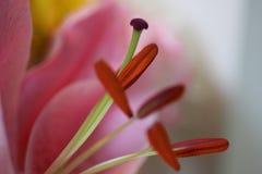 Flower, Flora, Pink, Macro Photography