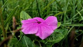 Flower, Flora, Pink, Plant