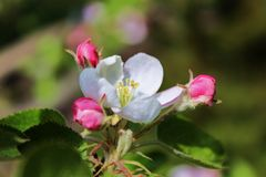 Flower, Flora, Plant, Blossom royalty free stock image