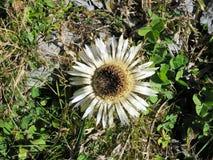 Flower, Flora, Plant, Daisy Family Royalty Free Stock Photography