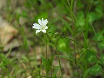 Flower, Flora, Plant, Grass royalty free stock images