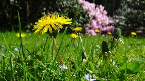 Flower, Flora, Plant, Meadow Stock Images