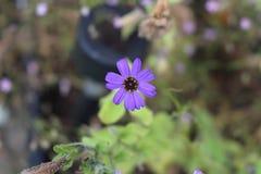 Flower, Flora, Plant, Purple