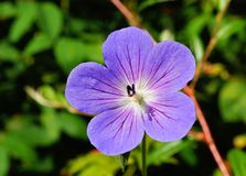 Flower, Flora, Plant, Purple royalty free stock image