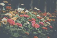Flower, Flora, Plant, Spring
