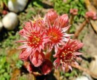 Flower, Flora, Plant, Subshrub stock photo