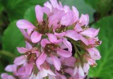 Flower, Flora, Plant, Subshrub royalty free stock photos