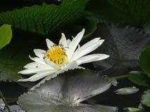 Flower, Flora, Plant, Water