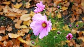 Flower, Flora, Plant, Wildflower