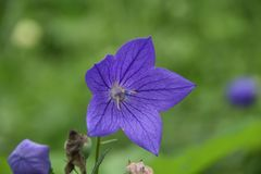 Flower, Flora, Plant, Wildflower Royalty Free Stock Photo
