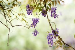 Flower, Flora, Purple, Branch Stock Photo