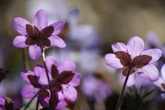 Flower, Flora, Purple, Plant stock photo