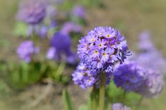 Flower, Flora, Purple, Plant stock photography