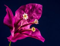 Flower, Flora, Violet, Pink royalty free stock photos