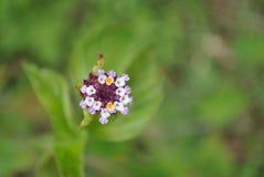 Flower, Flora, Wildflower, Flowering Plant stock photos