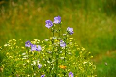 Flower, Flora, Wildflower, Meadow Stock Photos