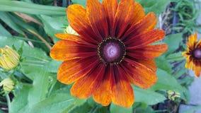 Flower, Flora, Wildflower, Petal stock photo