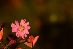 Flower, Flora, Wildflower, Petal stock photography