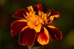 Flower, Flora, Wildflower, Petal Stock Images