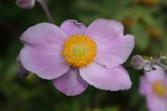Flower, Flora, Wildflower, Petal stock photos