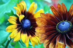 Flower, Flora, Wildflower, Petal royalty free stock image