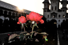 Flower,flori,nature,natura,arta,monastery orthodox. A beautiful flower in monastery royalty free stock images