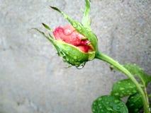 Flower. Is beauty Stock Photos