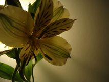 Flower. Garden Beautiful Ec UIO flora Stock Photo