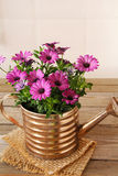 Flower in a flower pot Royalty Free Stock Image