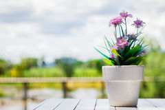Flower in a flower pot on an white table with background. The flower in a flower pot on an white table with background Royalty Free Stock Photo