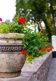 Flower, flowerbed Petunia Stock Images