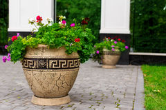 Flower, flowerbed Petunia Stock Image