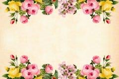 Flower, Flowering Plant, Flower Arranging, Blossom royalty free stock image