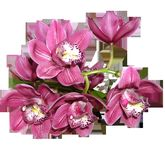 Flower, Flowering Plant, Pink, Cut Flowers stock photography