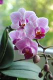Flower, Flowering Plant, Pink, Plant stock photo