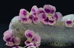 Flower, Flowering Plant, Pink, Purple stock image