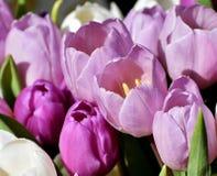 Flower, Flowering Plant, Pink, Purple stock photos