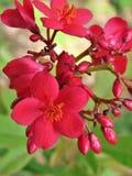 Flower, Flowering Plant, Plant, Blossom stock image
