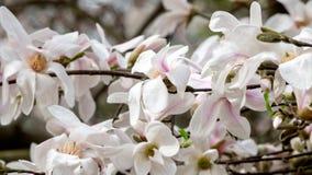 Flower, Flowering Plant, Plant, Blossom stock images