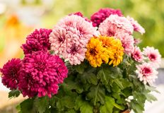 Flower, Flowering Plant, Plant, Floristry